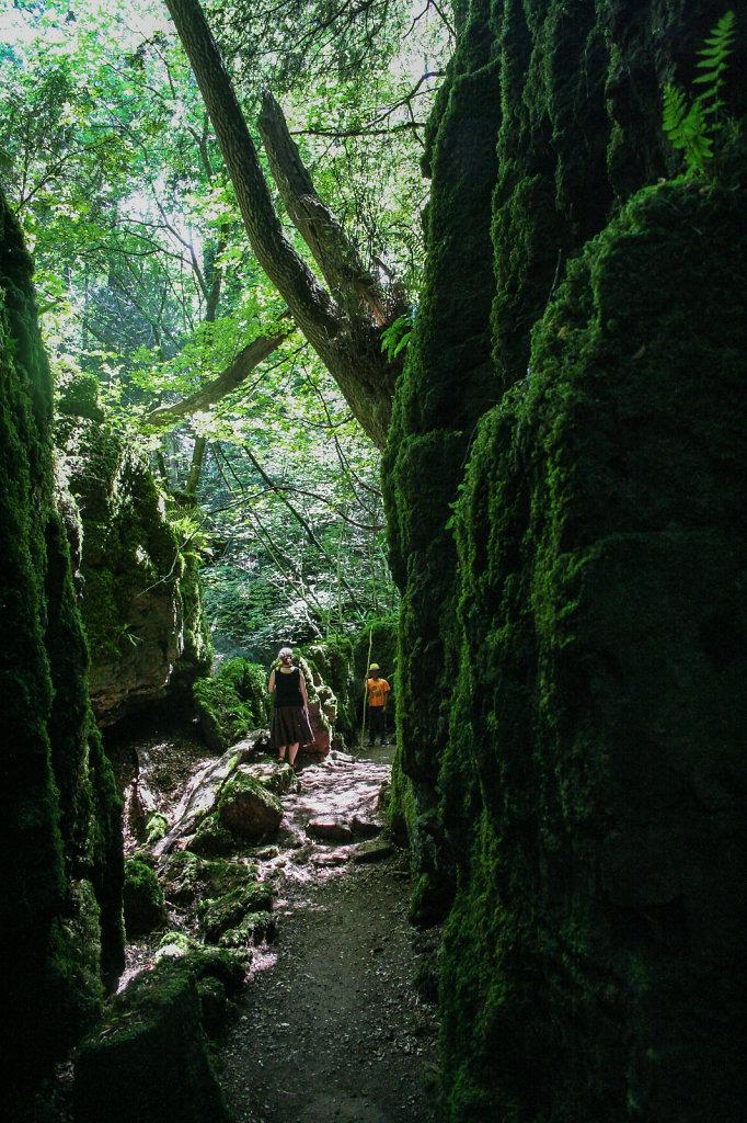 Der Puzzelwood im Forest of Dean