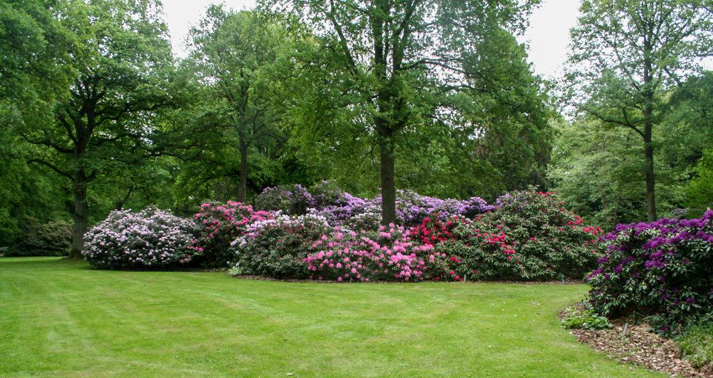 Rhododendrongruppe im Rhododendron-Park Bremen
